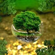 Alacsony szerves anyag kibocsátású termékek